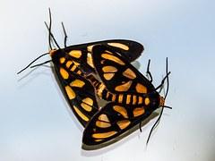 moths-1095777__180