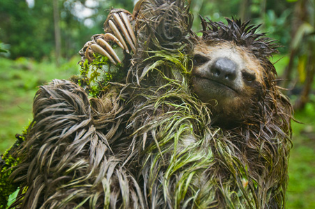 Image result for sloth with moss