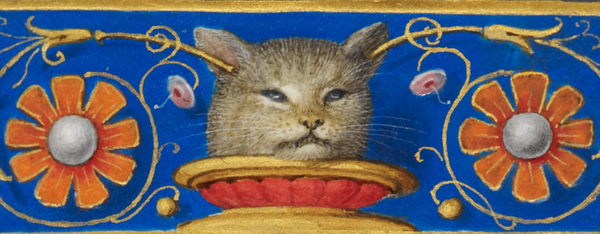 grumpy_medieval_cat