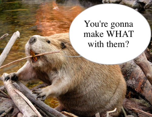 beaver-500x384