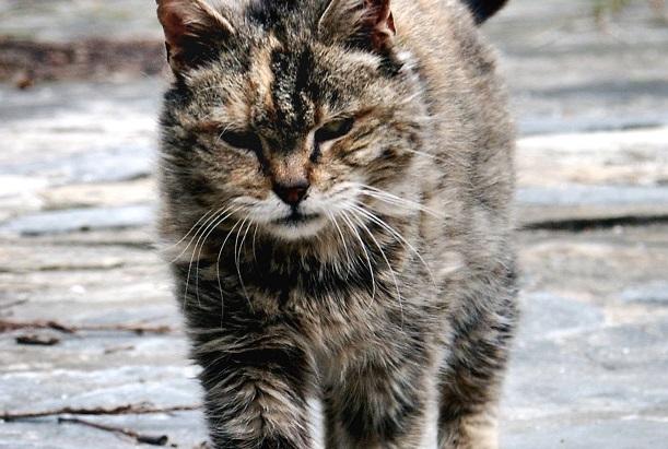 francesco marciuliano cat poems