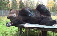 bear artist