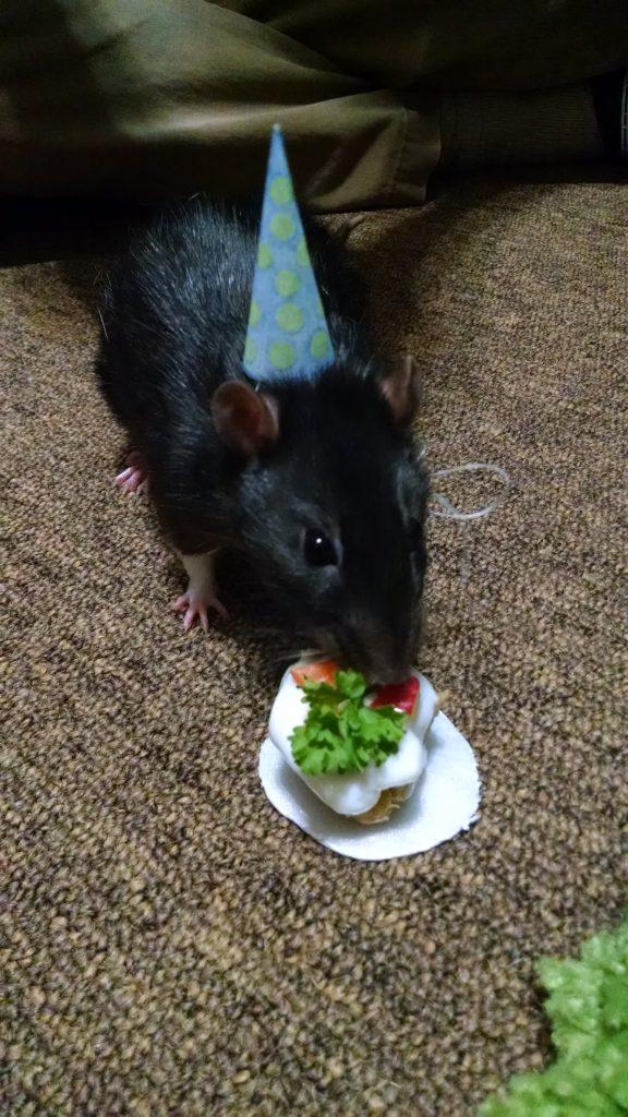 Rat Day