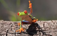 frogs antibiotics