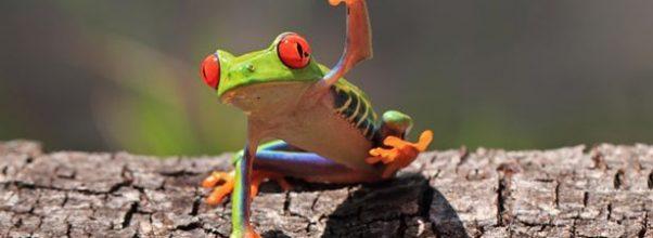 frogs antibiotics