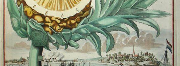 pineapple theft 18th century