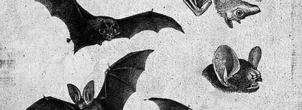 images of bats